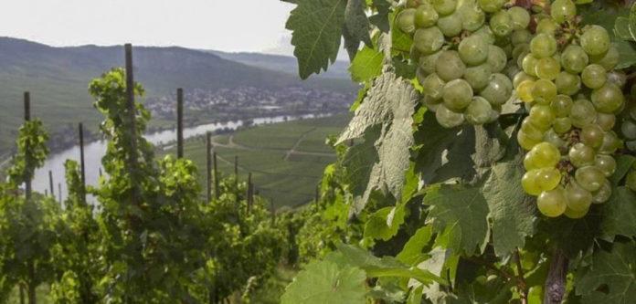 Tysk vin vinder flest priser